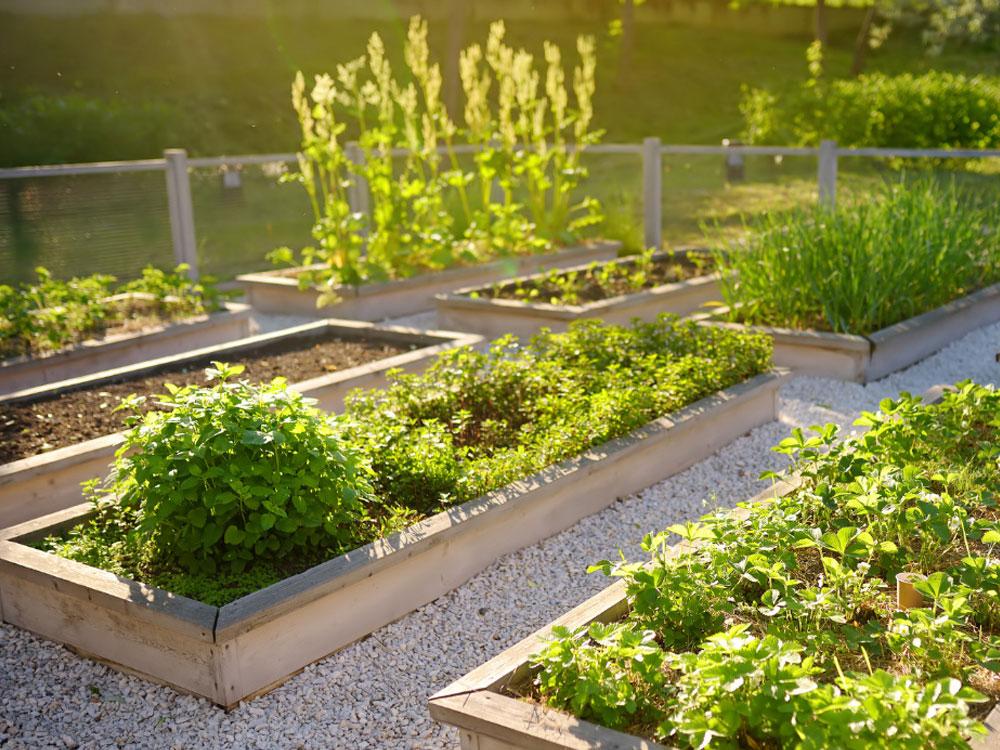 vegetable garden kits at gubbins pulbrook